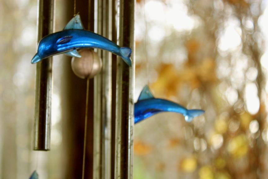 delfinot